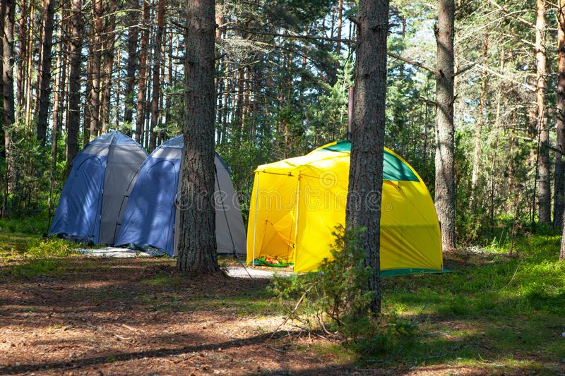Comfortable outdoor recreation. Three small technical camping tent stands in shade of pine forest, weather is sunny. Summer camp. Comfortable outdoor recreation royalty free stock photo