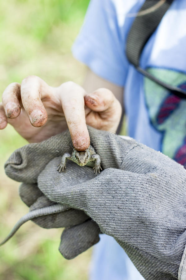 Comforting an injured lizard stock images