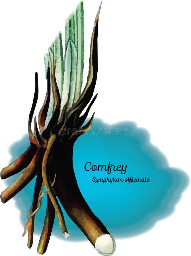 Comfrey royalty ilustracja