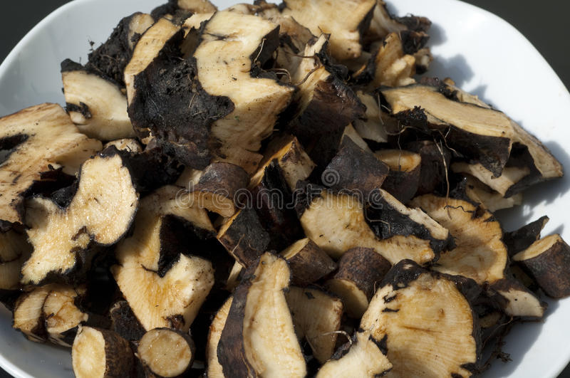 Comfrey; Common; medicinal, roots stock photo