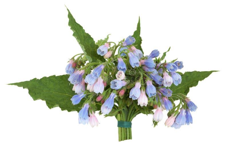 comfrey kwiatu ziele posy zdjęcia stock