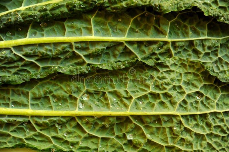 Comida alcalina, sana: la col rizada sale de los detalles fotos de archivo