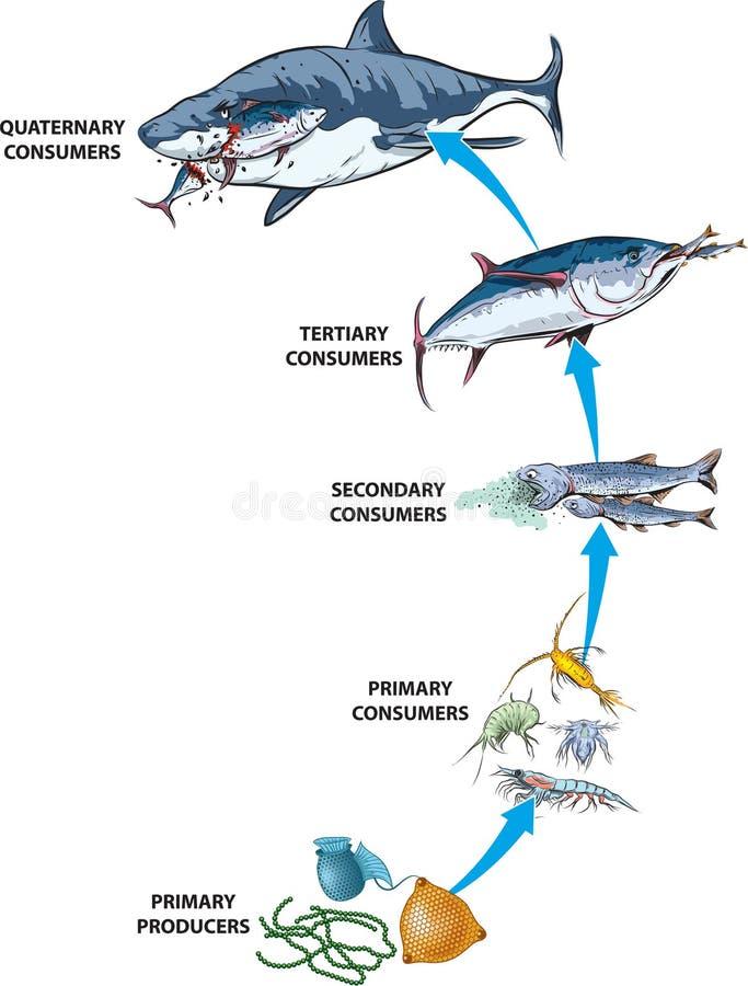 Comida cadena-marina ilustración del vector