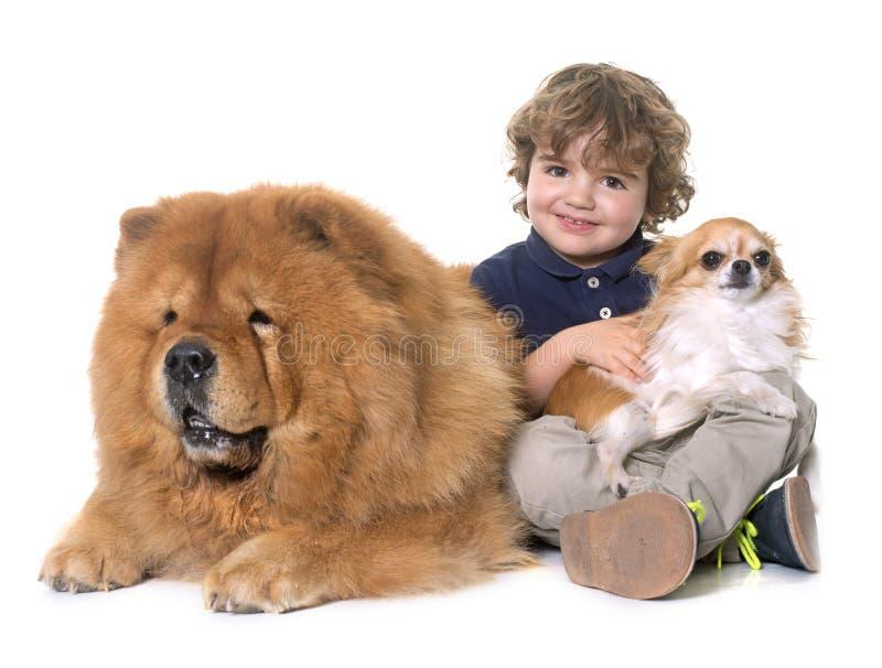 Comida, chihuahua e rapaz pequeno de comida foto de stock