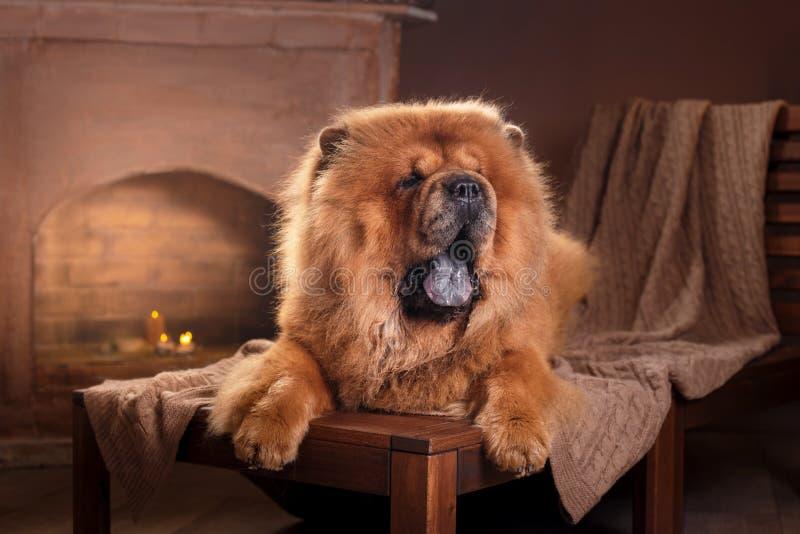 Comida da comida da raça do cão foto de stock royalty free