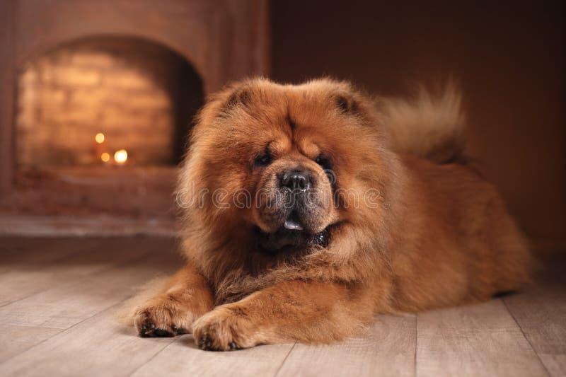 Comida da comida da raça do cão imagem de stock royalty free