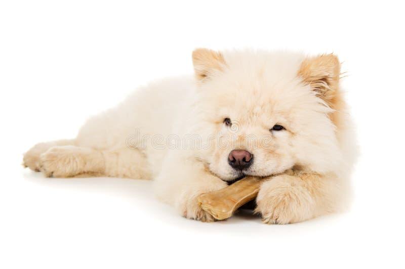 Comida de comida pequena bonita do cachorrinho imagens de stock royalty free