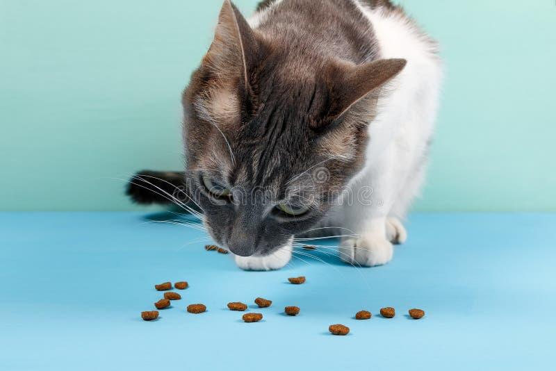 A comida de gato na forma do corações imagens de stock