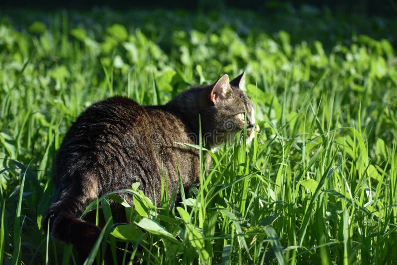 Comida de gato, gato na grama fotografia de stock royalty free