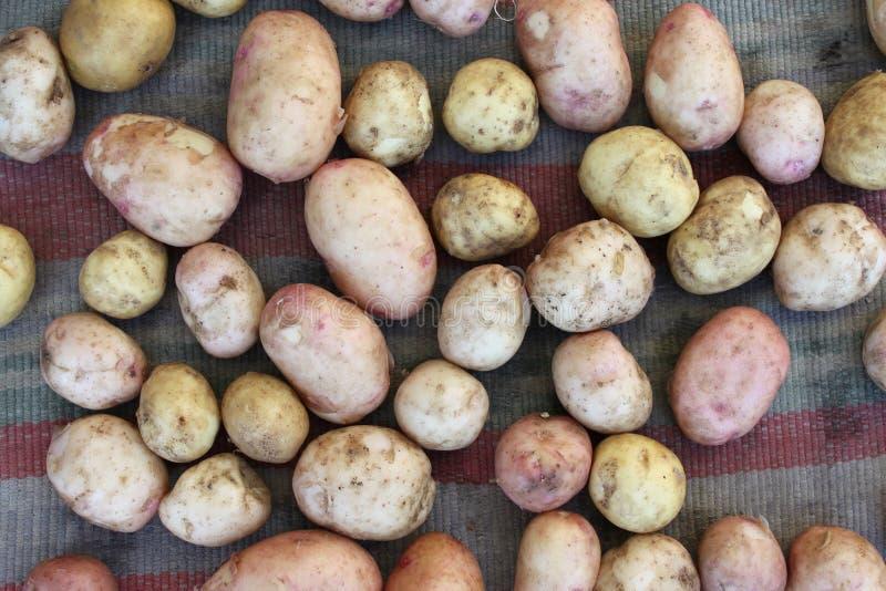 Comida de las verduras crudas de las patatas fotografía de archivo libre de regalías