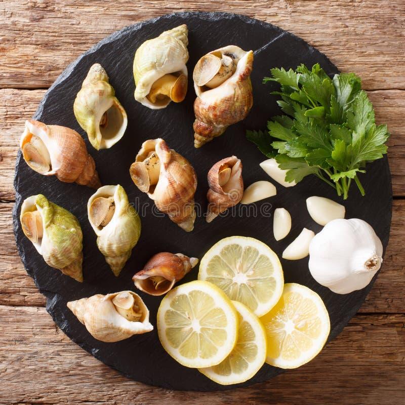 Comida francesa natural: caracoles de mar comestibles crudos primer y limón, p fotografía de archivo libre de regalías