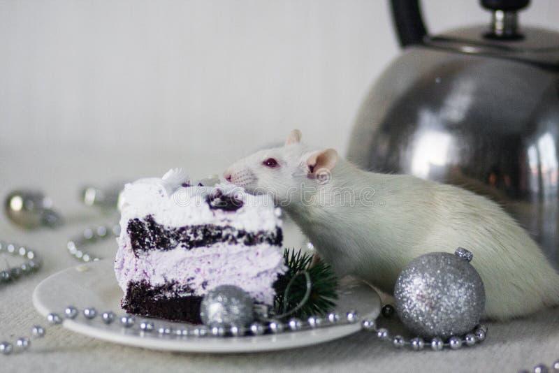 Comida por el Año Nuevo Hornada de DIY Receta de la torta A?o de la rata fotografía de archivo