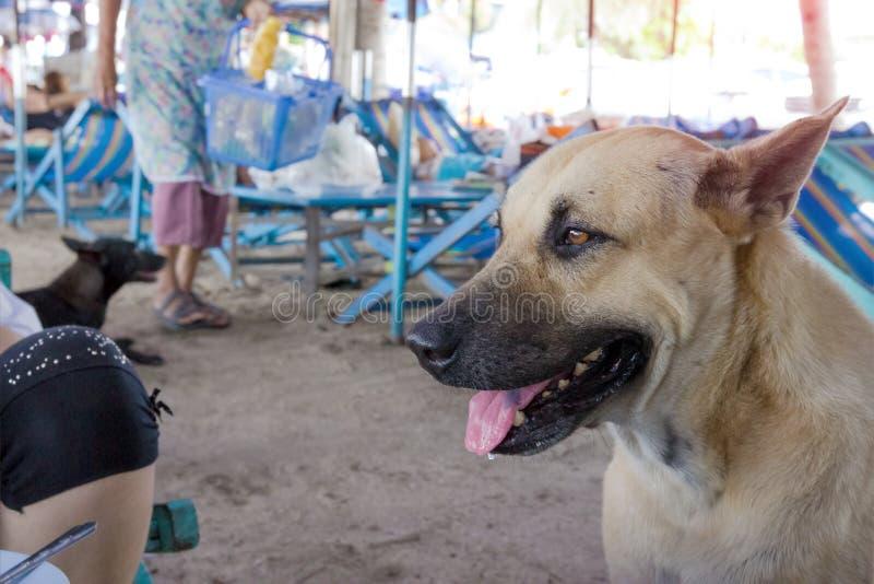 Comida que espera del perro perdido para imagen de archivo libre de regalías