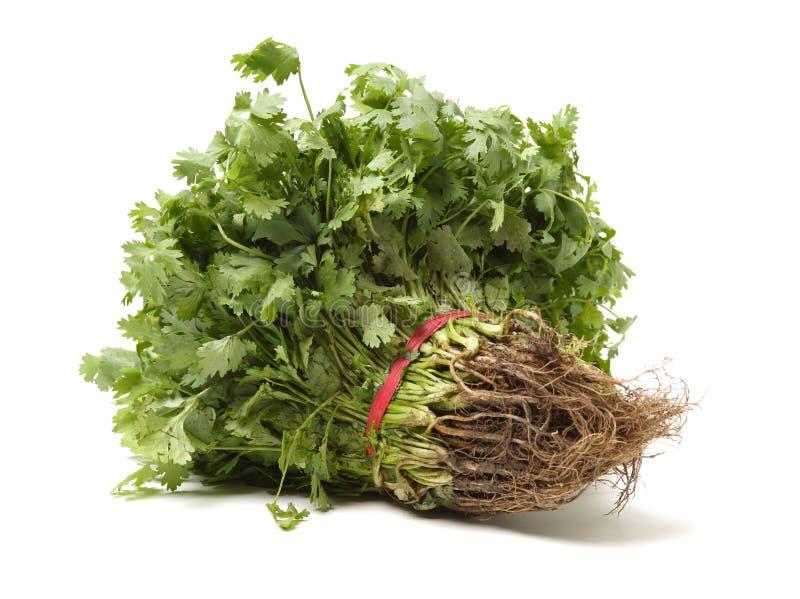 Comida verde de la planta vegetal fresca del manojo del perejil foto de archivo