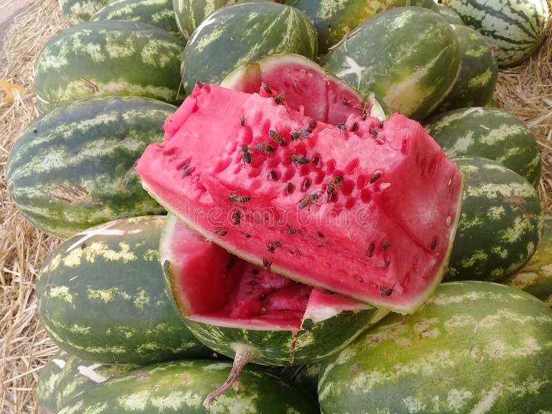 Comida y frutas de Marruecos de la bio sandía verde bio tropicales foto de archivo libre de regalías