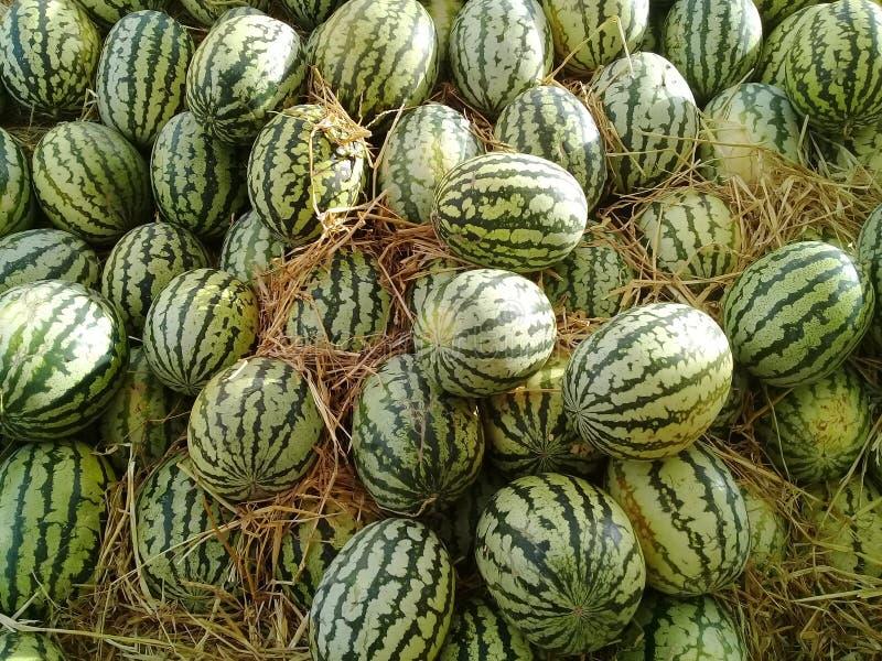Comida y frutas de Marruecos de la bio sandía verde bio tropicales imagenes de archivo