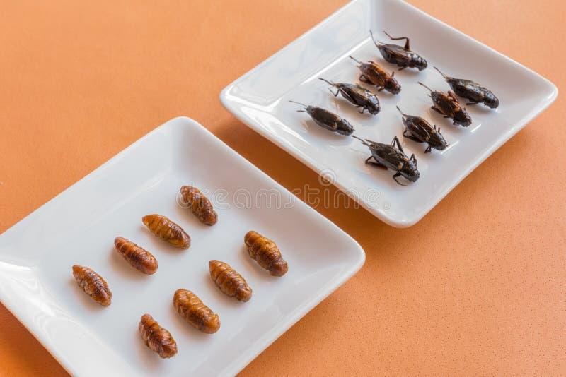 Comidas del insecto en magdalenas del plátano imágenes de archivo libres de regalías