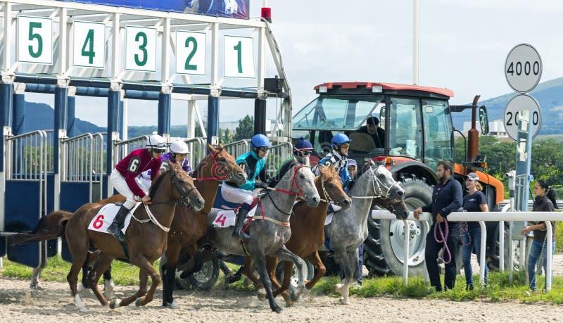 Comience la carrera de caballos en Pyatigorsk imágenes de archivo libres de regalías