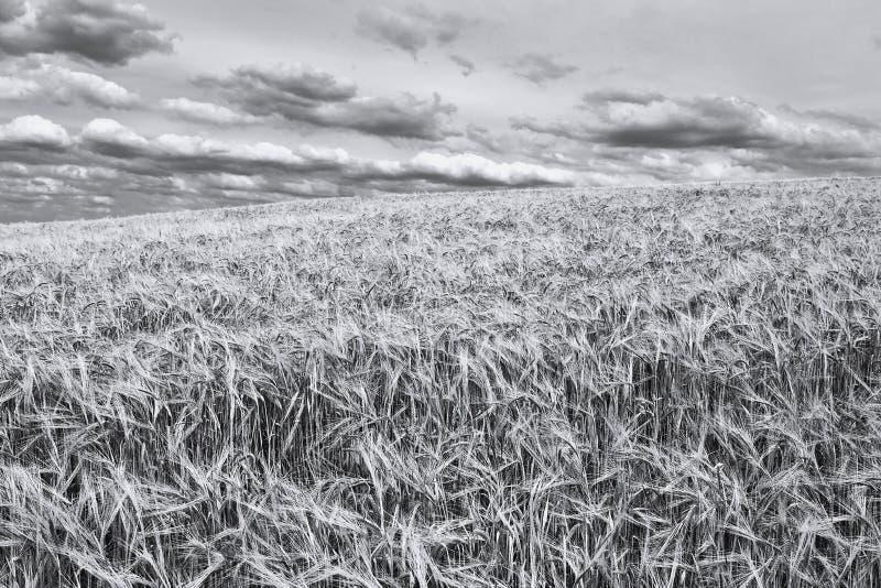 Comienzo del verano en blanco y negro imagen de archivo