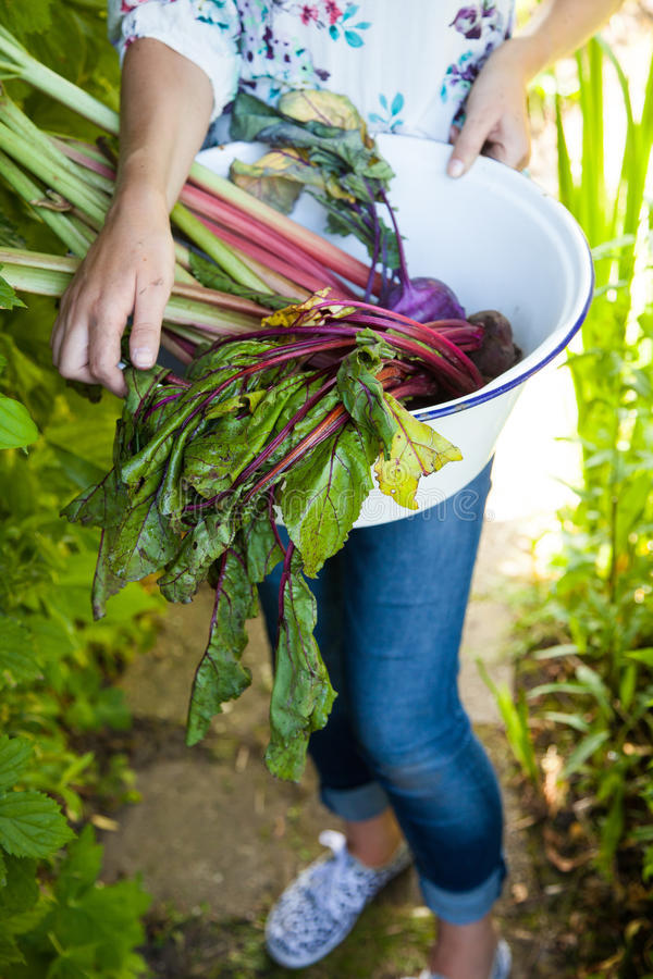 Download Coming Back From The Garden Stock Photo - Image: 26890646