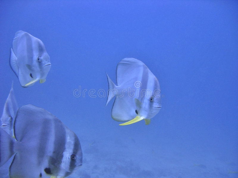 Download Coming Closer stock image. Image of saltwater, seafood - 226169