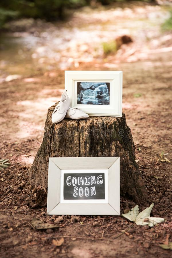 Coming Soon and Baby Ultrasound Photo Frames and Baby Shoes on T. Ree Trunk in Woods stock photography