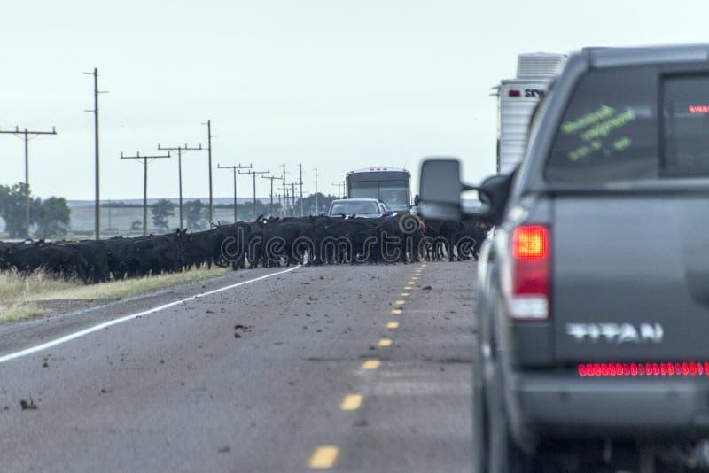 Commande de bétail d'autoroute du Montana image libre de droits