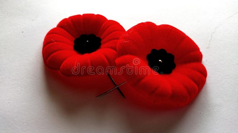 Commemorative world war 1 2 remembrance day Poppies Canada stock image