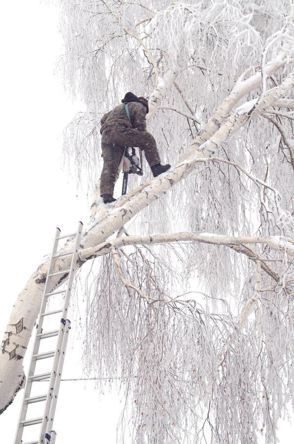 Comment couper un arbre grand images stock