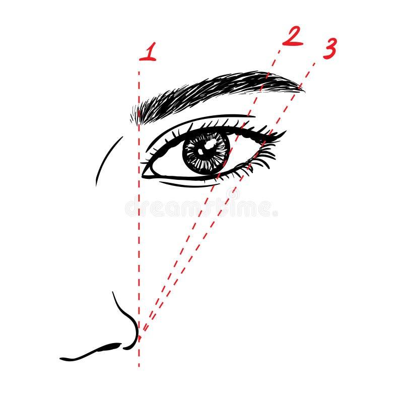 Comment peindre les sourcils illustration stock