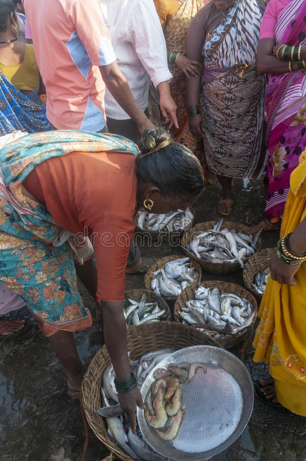 Commerce de vente aux ench?res de poissons ? la jet?e de harne, Dapoli, Ratnagiri, maharashtra image stock