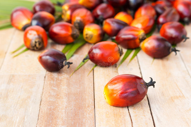 Commercial palm oil cultivation. Since palm oil contains more sa. Turated fats its use in food. Oil from Elaeis guineensis is also used as biofuel. It is used as royalty free stock image