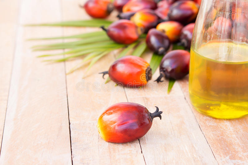 Commercial palm oil cultivation. Since palm oil contains more sa. Turated fats than oils made from canola, corn, linseed, soybeans, safflower, and sunflowers, it stock photography