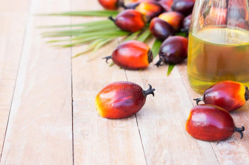 Commercial palm oil cultivation. Since palm oil contains more sa. Turated fats than oils made from canola, corn, linseed, soybeans, safflower, and sunflowers, it royalty free stock photography