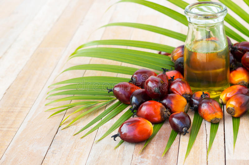 Commercial palm oil cultivation. Since palm oil contains more sa royalty free stock image