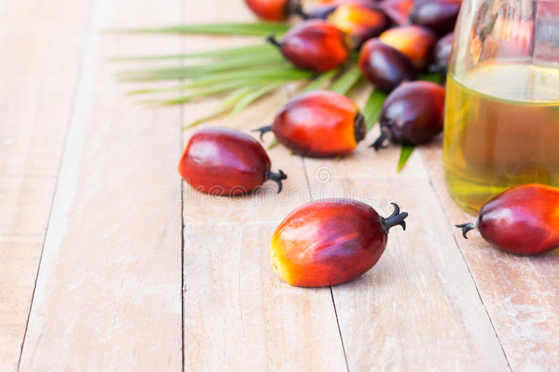 Commercial palm oil cultivation. Since palm oil contains more saturated fats its use in food. Oil from Elaeis guineensis is also royalty free stock photo