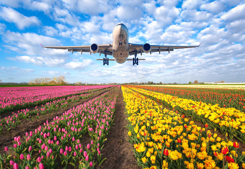 Commercial plane and tulips royalty free stock photo