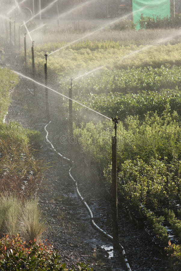Download Commercial sprinklers stock photo. Image of outdoor, care - 39377972