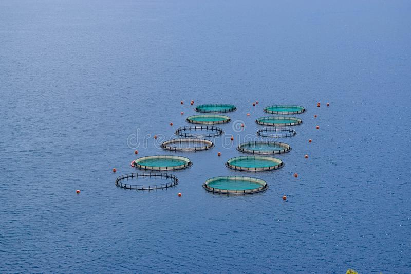 The Fish Farms. The commercially fish farms in fish ponds royalty free stock image