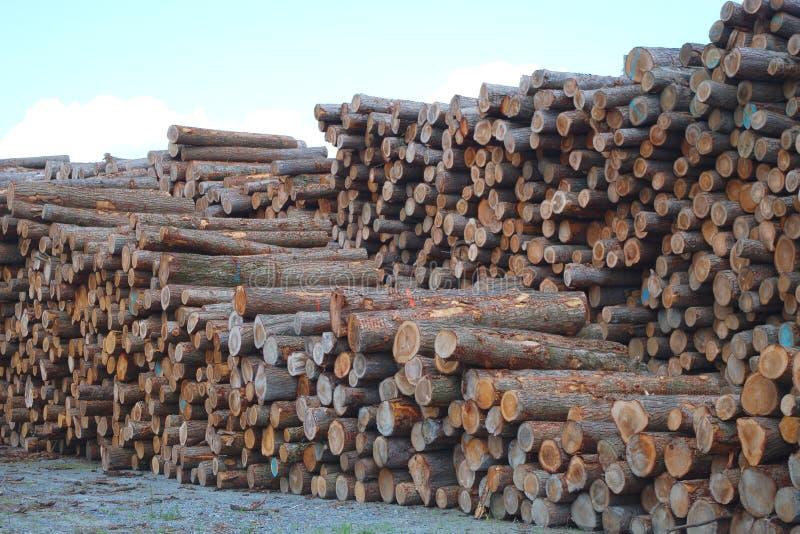 Commercieel van de timmerhoutwerf hout gestapeld bos de industriemilieu het hakken hout royalty-vrije stock afbeeldingen