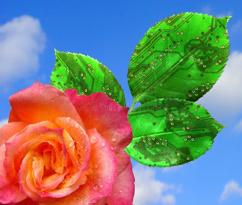 Commercio di fioritura fotografia stock
