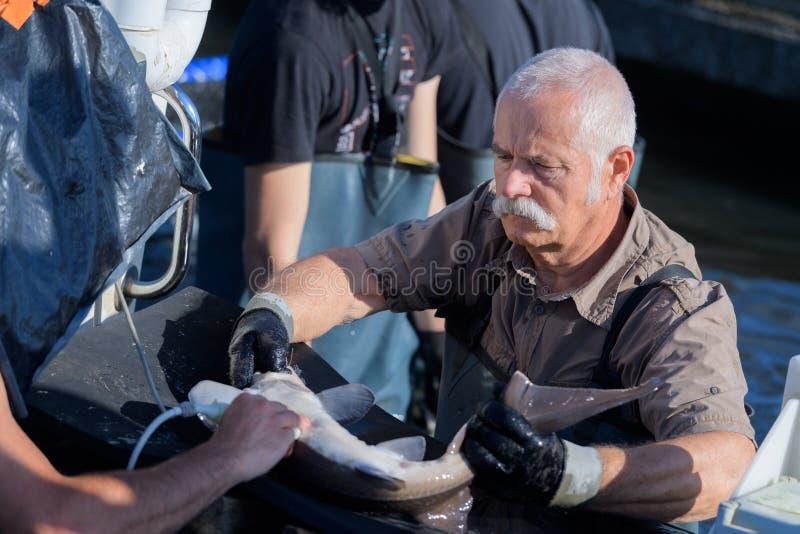 Commerical rybak przy pracą zdjęcie royalty free