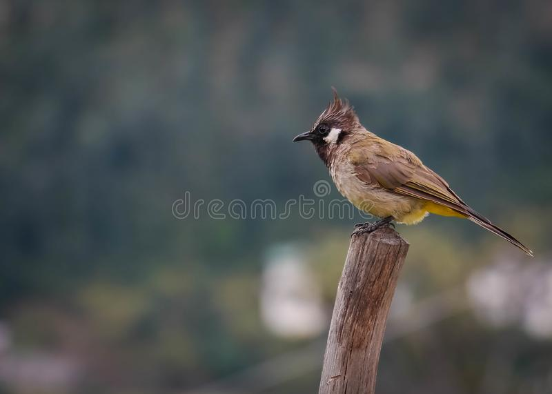 A common bird sitting on a wooden log royalty free stock photography