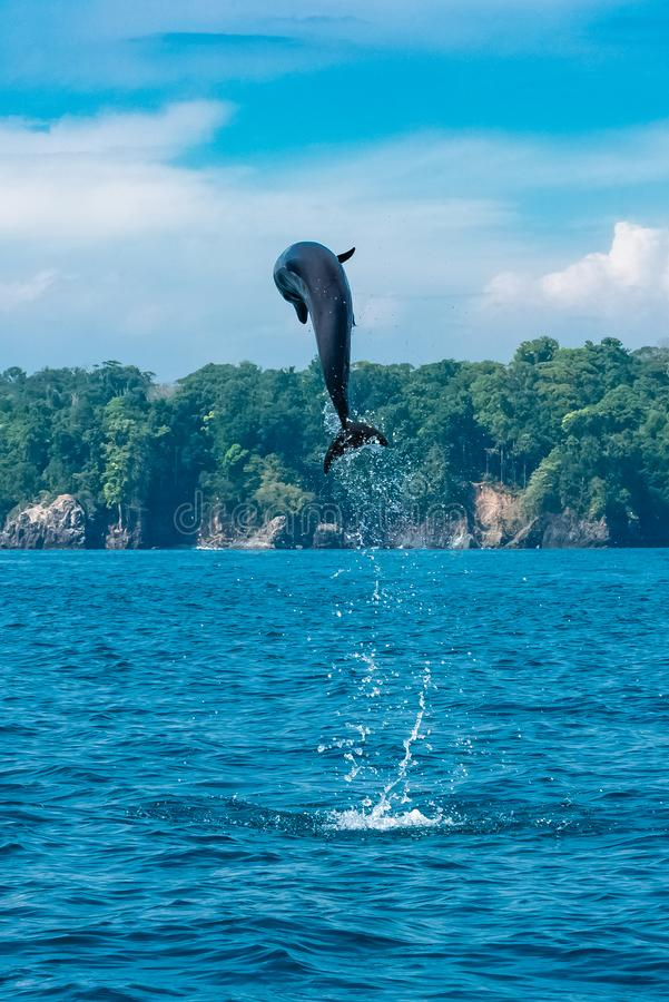 Common bottlenose dolphin stock photography