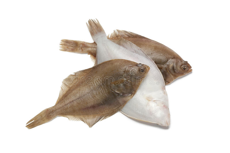 Common dab fishes. On white background royalty free stock image