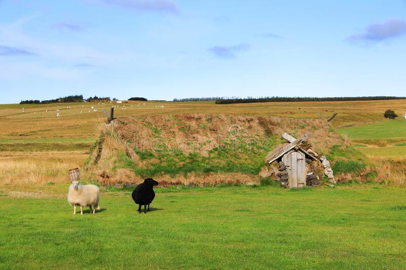 Ancient traditional turf house.  Sheeps on the grass in front of the house. The common Icelandic turf house would have a large foundation made of flat stones royalty free stock photo