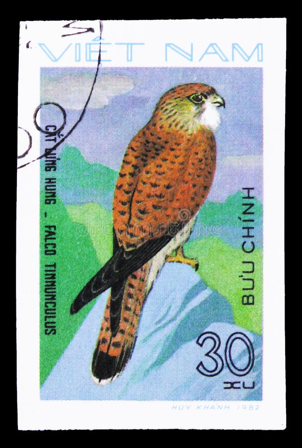 Common Kestrel (Falco tinnunculus), Birds of Prey serie, circa 1982. MOSCOW, RUSSIA - SEPTEMBER 26, 2018: A stamp printed in Vietnam shows Common Kestrel (Falco stock photo