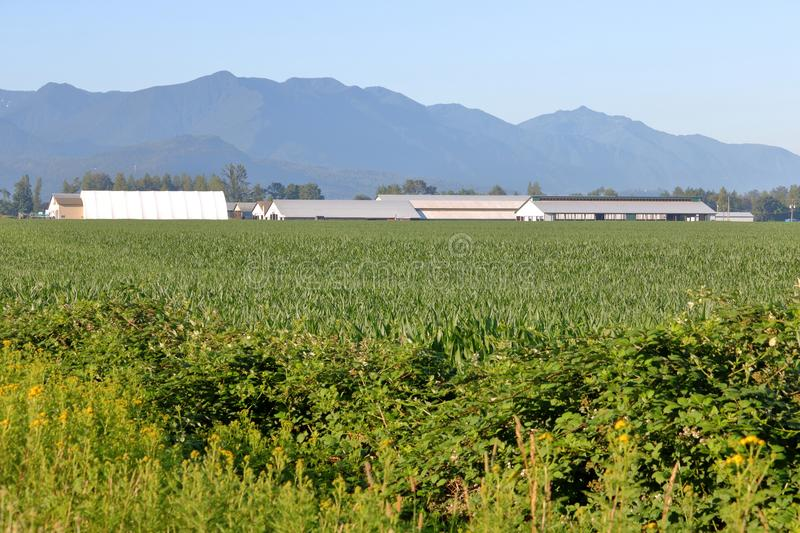 Canadian West Coast Fraser Valley Area. A common landscape found during the summer months on Canada`s west coast and a farming community in the Fraser Valley royalty free stock photography