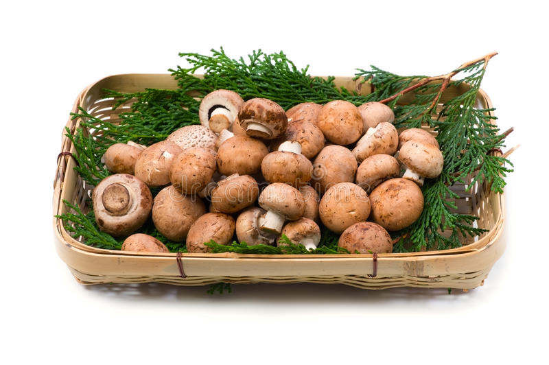 Common mushroom. Cooking ingredient series common mushroom. available for clipping work royalty free stock photos