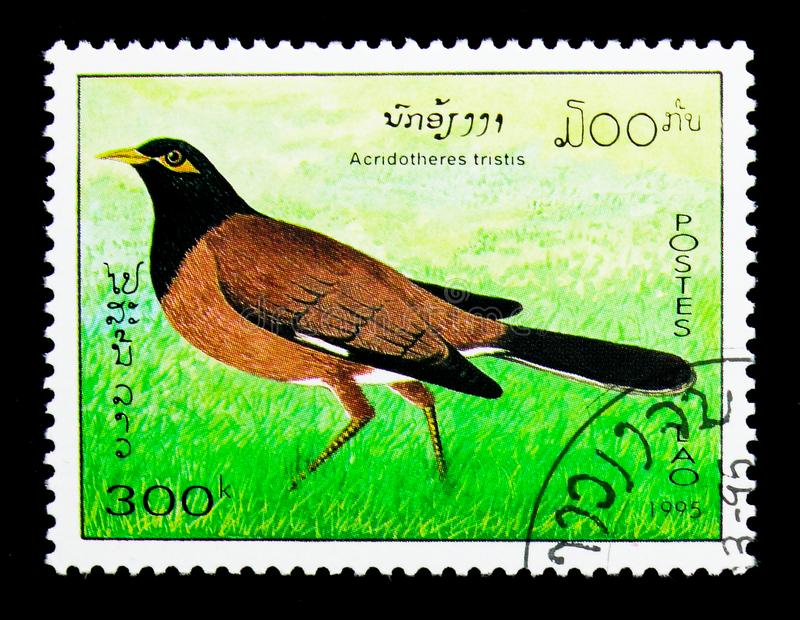 Common Myna (Acridotheres tristis), Birds serie, circa 1995. MOSCOW, RUSSIA - NOVEMBER 26, 2017: A stamp printed in Lao People's Democratic stock image